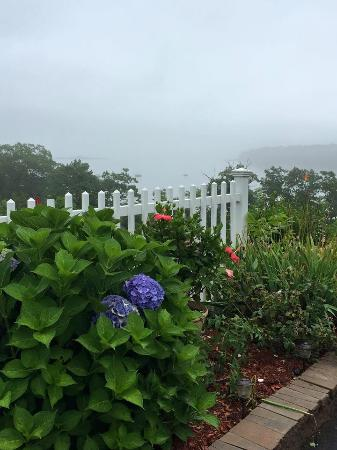 Rockport, ME: The Ledges flowers - on a foggy day