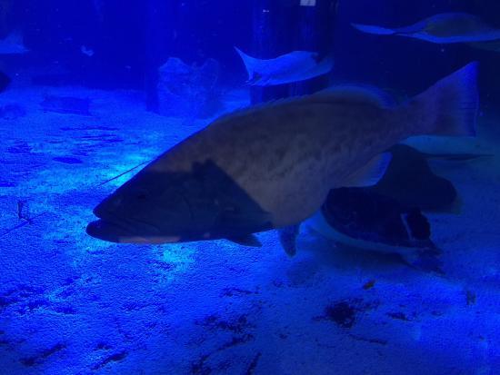 Picture Of Mystic Aquarium Mystic Tripadvisor