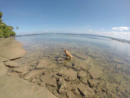 Maravu Taveuni Lodge : New spot for chilling soon