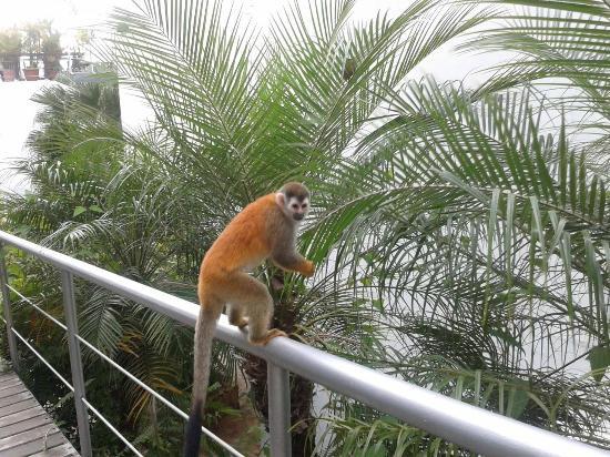 Gaia Hotel & Reserve: Monkey Business