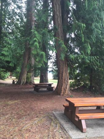 Porpoise Bay Provincial Park : Great spot for a picnic and hunting for clams