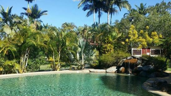 BIG4 Atherton Woodlands Tourist Park: Lovely Resort-style Pool