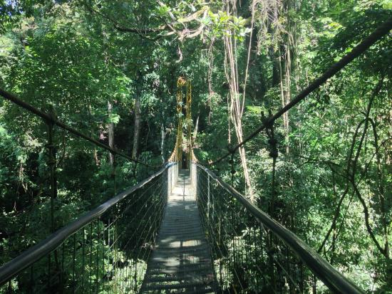 Pura Vida Gardens and Waterfalls: Sky bridge