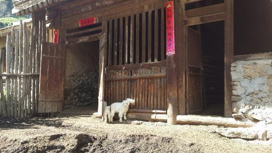 Wuzhai County, China: 蘆芽山