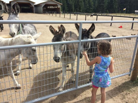 Turtle Valley Donkey Refuge: photo0.jpg