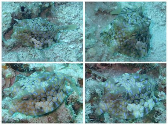This small baby swims fast picture of manta dive gili - Manta dive gili air ...