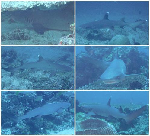 Sharks everywhere picture of manta dive gili air gili air tripadvisor - Gili air manta dive ...