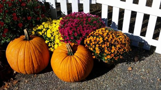 Autumn Landscaping In October 2014 Picture Of Buttonwood Park