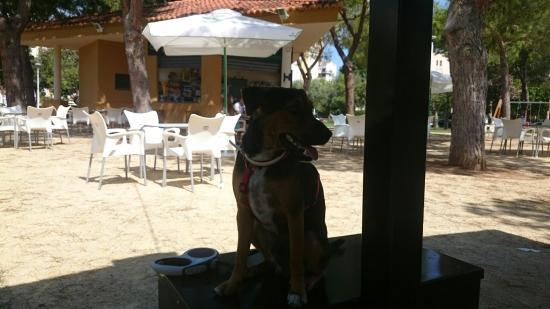 Isla Bonita - Garden Bar