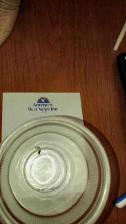 Americas Best Value Inn Eugene: Bed Bug caught at this hotel. The bites are nasty!