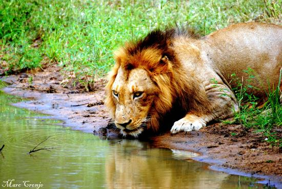 Kruger Flexi Tours - Day Tours