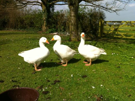 Fullers Hill Cottages: Mable, Ethle and Baby