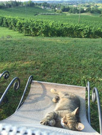 Alice Relais nelle Vigne: La valle e le vigne