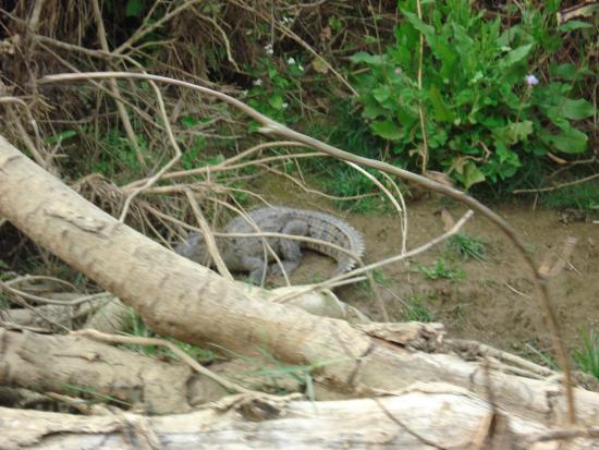 Baghmara Wildlife Resort: While canoeing