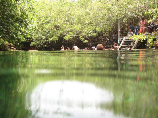 Riviera Maya, México: Al raz del cenote