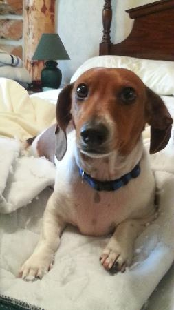 Imnaha River Inn Bed and Breakfast: Rocky the Dachsie Host