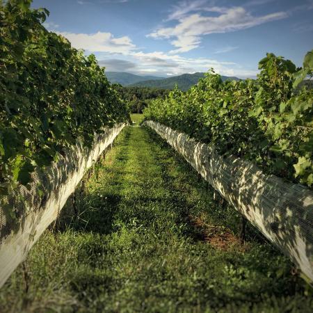 Crozet, VA: Stinson Vineyards