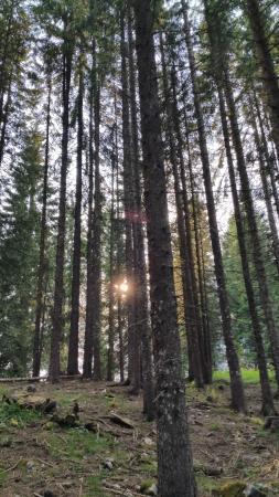 Enego, Itália: il bosco al tramonto