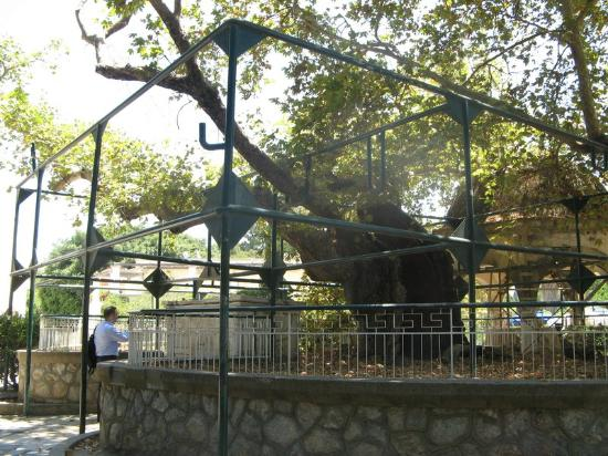 Hippocrates Tree: Tree in a metal cage