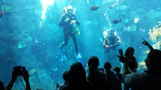 Divers Talking To The Audience Picture Of Aquarium Of