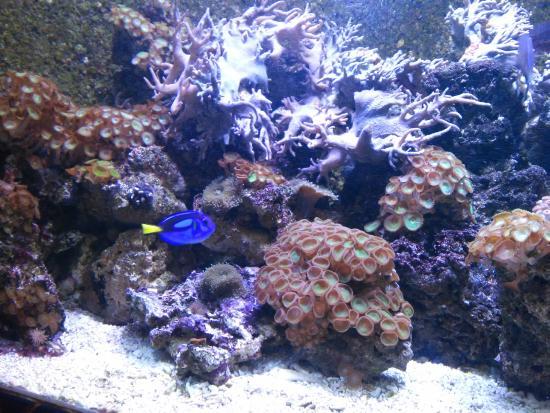 aquarium rond picture of aquarium sea val d europe marne la vallee tripadvisor