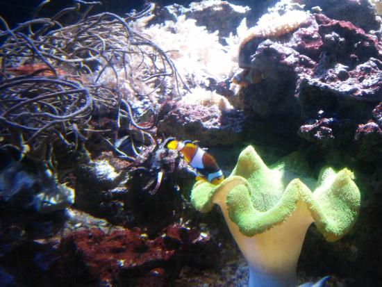 sea aquarium picture of aquarium sea val d europe marne la vallee tripadvisor