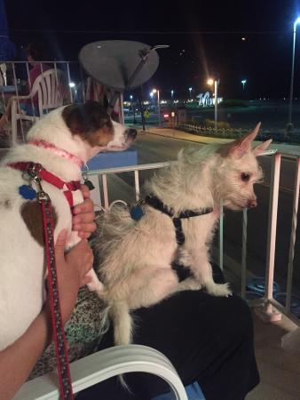 Rus Mar Motel: Our doggies love the Rus Mar!