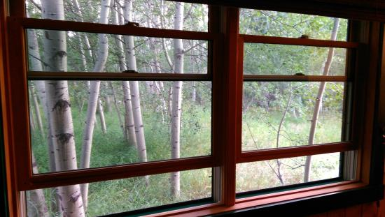 Travelers Rest Lodge: Aspens all around