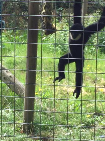 location photo direct link wingham wildlife park kent england