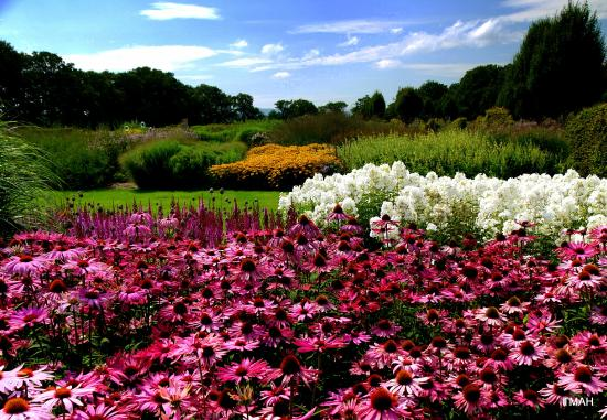 Sussex Prairies Garden