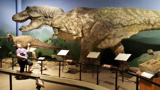 Rather Large Dino Picture Of Creation Museum Petersburg