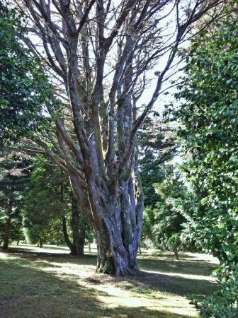 Quinta da Junta Garden