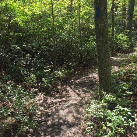 Locust Grove, VA: Thick Underbrush for Fighting