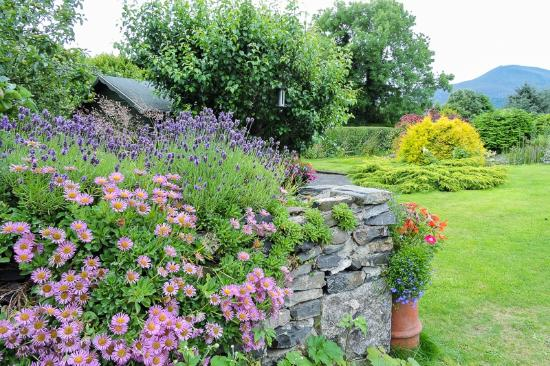 Mountain View Bed & Breakfast: The stunning gardens with a view to the Mournes behind.