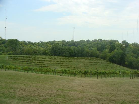 Carrollton, KY : River Valley Winery vineyards