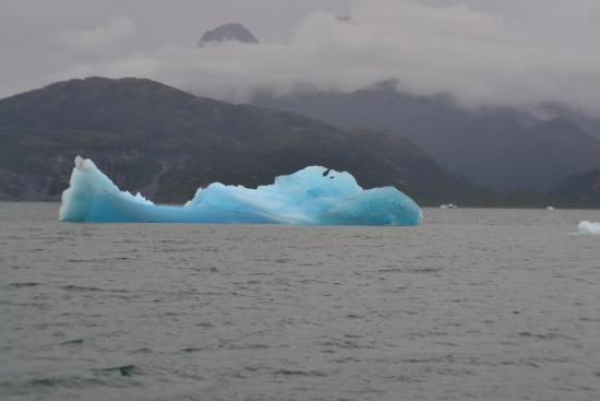 Stan Stephens Glacier & Wildlife Cruises: Just a beautiful piece of glacier..
