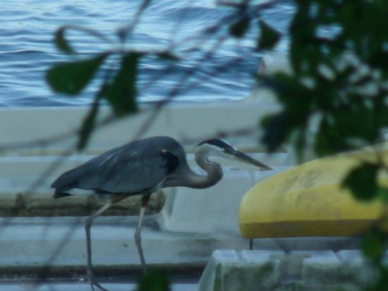 Treasure Island Bed & Breakfast: Wildlife on the lake.