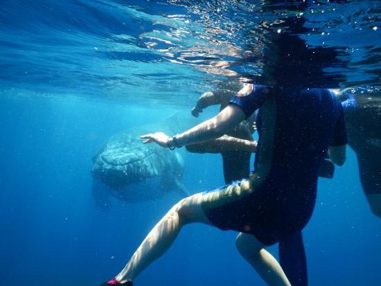 Beluga Diving Vava'u : Beluga Diving swim with humpbacks