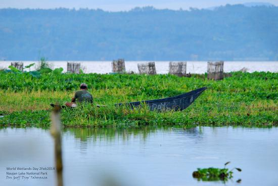 Naujan Lake National Park: A local fisherman at Naujan Lake