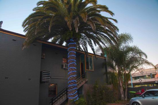 Hog's Breath Cafe: Palm lights