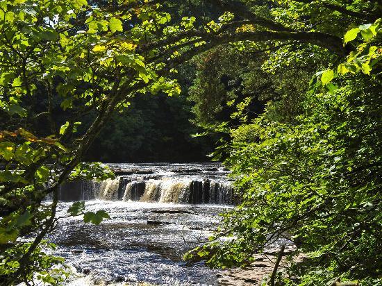 Wensleydale Farmhouse Bed & Breakfast: Aysgarth Falls