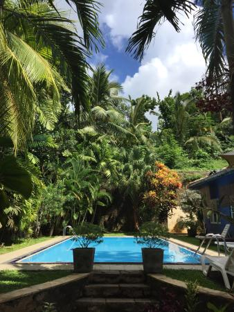 Black Beauty Guesthouse: BB pool