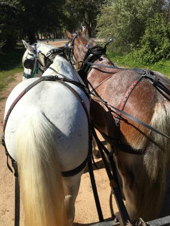 Belhus, Australia: The beautiful horses