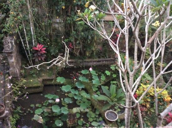 Alam Jiwa: Lolly ponds