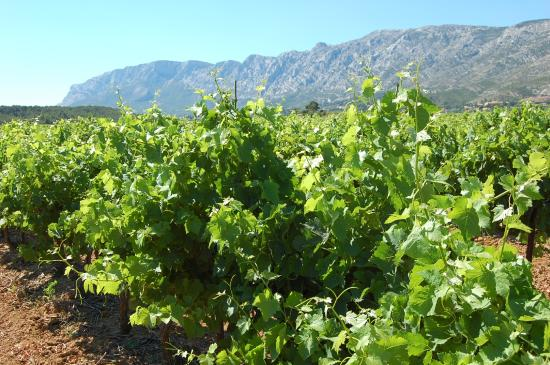 Tours in Provence - Day Tours : wine testing in Provence