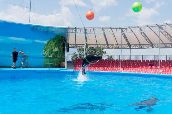 Dolphinarium Nemo