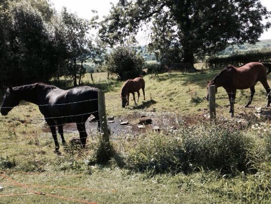 Craken House Farm Camping & Caravan Site