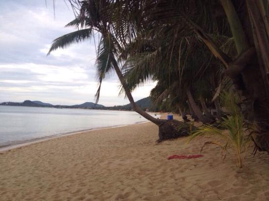 Palm Point Village: photo1.jpg
