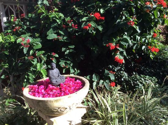 Les Lataniers Bleus: A corner in the garden