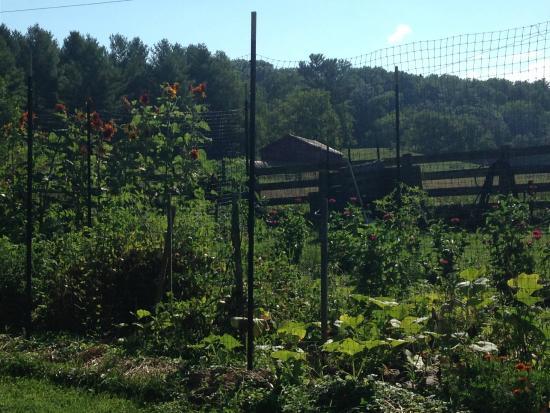 Little River Bed & Breakfast: Garden